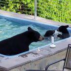 クマの親子がプールに入りに来る家。。