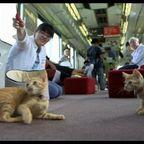 大量に!ネコが乗っている電車!!