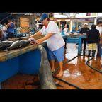 アシカがいる魚市場が!なんだか癒やされる!!