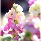 2019 季節の花