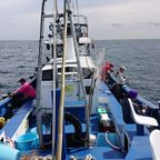 ヒラマサ 沖釣り