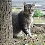 動物(特に猫ちゃん)