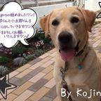 こじねー情報Blog