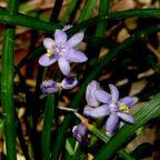 仙元山の植物
