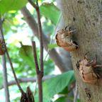 仙元山の昆虫