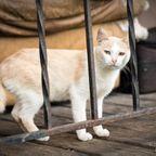 関連記事「【海外の廃墟】デトロイト・シティの猫屋敷 その1」のサムネイル画像