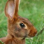 世界のウサギ