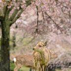 奈良の写真