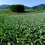 群馬県の風景写真
