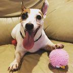 【画像】犬も笑う!ワンちゃんたちの笑顔がかわいい!!