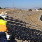 【画像】ダムに20000個の謎の真っ黒のボールを投入して、水面が真っ黒になっている!!