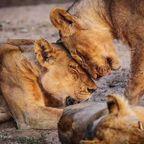 美しくかっこいい!野生の動物達の画像の数々!!