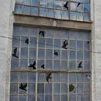 【画像】割れた窓ガラスを使った、割れた窓ガラスのように見えるアート!!