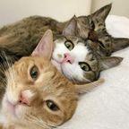 【画像】猫の顔だけの可愛いジェットストリームアタック!!