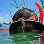 【画像】自然を撮影するカメラマンに興味津々の動物達!!