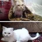 【画像】子汚い野良猫を拾って育てたら、こんなに可愛いニャンコになりましたよ!