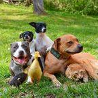 みんな仲良し!合成にしか見えない仲の良い動物たちの画像が凄い!!