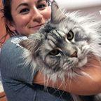 クソデカイ猫「メインクーン」の大きさがよく分る画像の数々!!