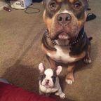 ずっと友達!仲がいい犬たちの画像が癒される!!