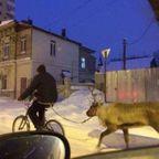 【画像】ロシアなら当たり前!ちょっと信じられないロシアの日常風景ww