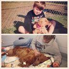 【画像】ペットの犬や猫を、最初に撮った写真と最後に撮った写真の数々・・・