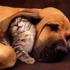 ほのぼのする!仲の良い犬と猫の画像の数々!!