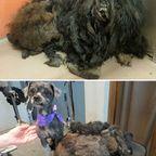 死にそうな野良犬が保護された後のビフォーアフターの比較画像の数々!!
