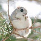 【画像】ほのぼのする冬の野生の動物たちの画像の数々!