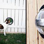 【画像】ワンちゃん大喜び!犬用の窓が丸くてカッコいい!!