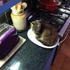 にゃんとも言えない、ちょっと困った猫の画像の数々!!