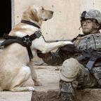 戦場でも癒される!犬で癒されている兵士たちの写真の数々!!