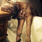 どこでも寝れる!?どこでも寝てる可愛い犬の画像の数々!!