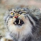 凶悪そうな顔をしている!かわいい猫の画像の数々!!