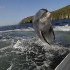 ちょっと嬉しい!動物たちの驚きの瞬間を捉えた写真の数々!!