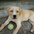 何犬と何犬?ちょっと特徴的な雑種の犬の画像の数々!!