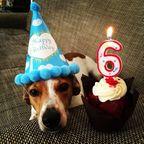 ワンちゃんご満悦!動物達の誕生日の写真の数々!!(犬多め)