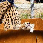 ちょっと危険なニオイがする!幸せそうな動物たちの写真の数々!