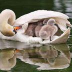 色々な動物の親子の癒される画像の数々!!