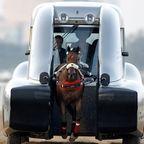 まさに1馬力!?馬の力を利用した自動車の画像の数々!!