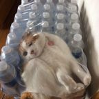 なぜ猫は狭いところが好きなのか??挟まっている猫の画像の数々www
