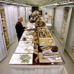 【画像】アメリカを代表するスミソニアン博物館の標本の保存倉庫が凄い!!