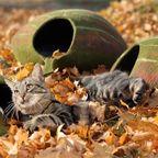 【画像】ネコ大喜び!葉っぱのような猫の家がかわいい!!