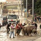 洪水で動物達が大脱走した時の写真の数々ww