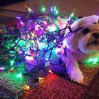 かわい過ぎる!犬とクリスマスのコラボ画像の数々!!