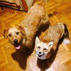 【画像】犬と猫と仲良しのキツネが可愛い!!