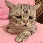 見ていると!悲しくなってしまう猫の画像の数々!!