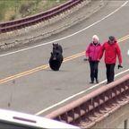 子連れのクマが観光客を追いかける怖すぎる動画…