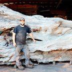 【画像】巨木でできた!タコの彫刻がすごい!!