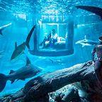 【画像】360度、巨大な水槽に囲まれたお部屋に泊まれるホテルが凄い!!!
