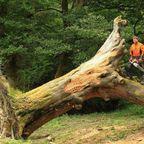 木の魅力を最大限に生かした!建物やインテリアの画像の数々!!